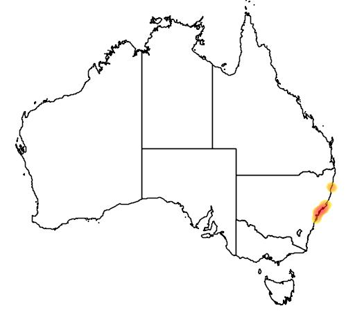 distribution map showing range of Diuris praecox in Australia
