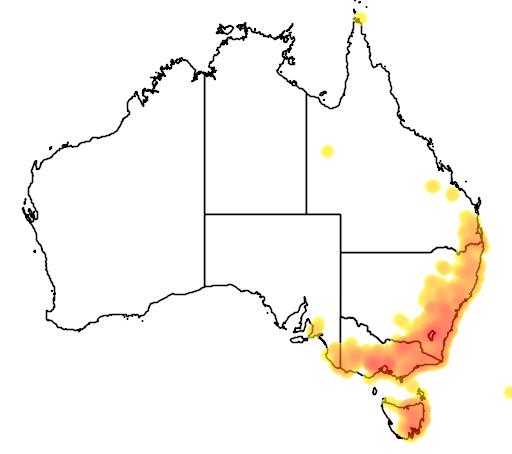 distribution map showing range of Diuris sulphurea in Australia