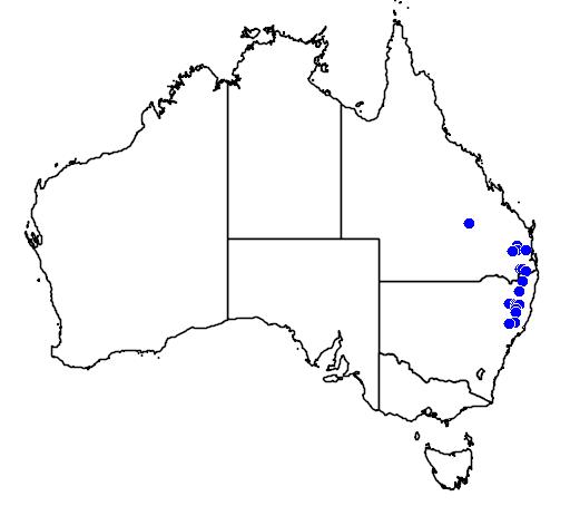 distribution map showing range of Dockrillia cucumerina in Australia