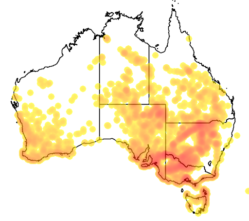 distribution map showing range of Duma adpressa in Australia