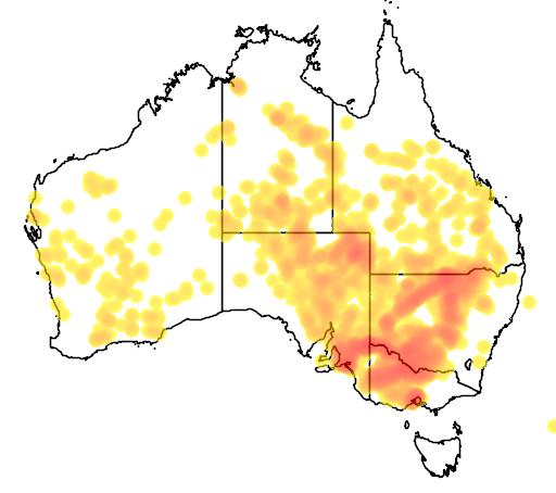 distribution map showing range of Duma florulenta in Australia