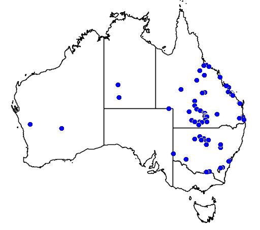 distribution map showing range of Dysphania littoralis in Australia