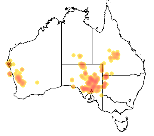 distribution map showing range of Egernia stokesii in Australia