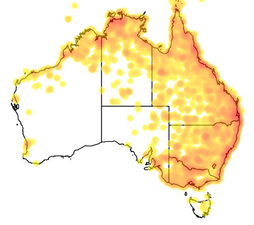 distribution map showing range of Egretta intermedia in Australia