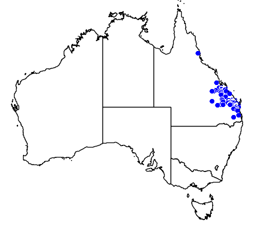 distribution map showing range of Elseya albagula in Australia