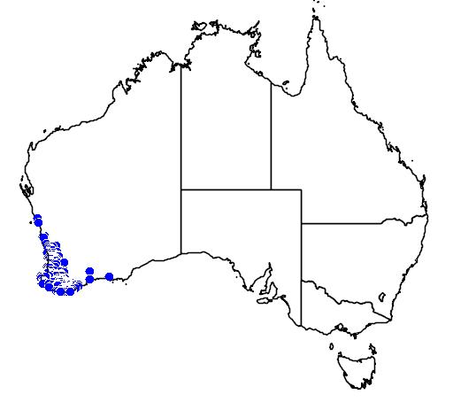 distribution map showing range of Elythranthera emarginata in Australia