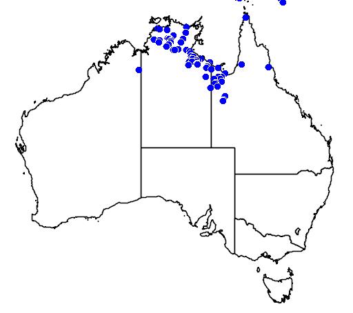 distribution map showing range of Emydura subglobosa in Australia