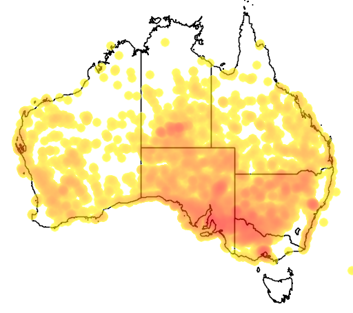 distribution map showing range of Enchylaena tomentosa in Australia