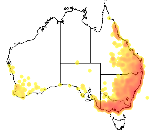 distribution map showing range of Eopsaltria australis in Australia