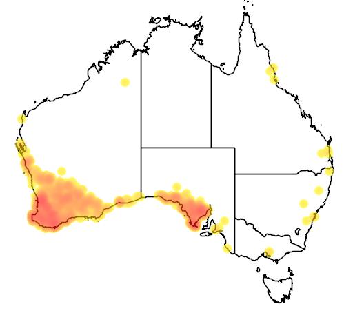 distribution map showing range of Eopsaltria griseogularis in Australia