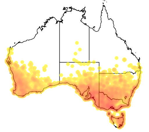 distribution map showing range of Epthianura albifrons in Australia