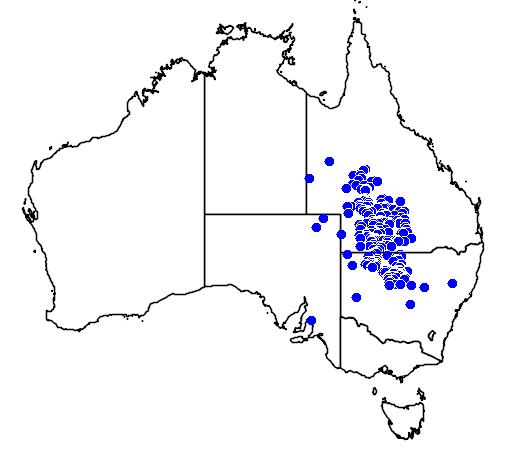 distribution map showing range of Eremophila bowmanii in Australia