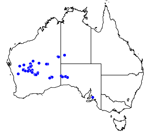 distribution map showing range of Eremophila hygrophana in Australia