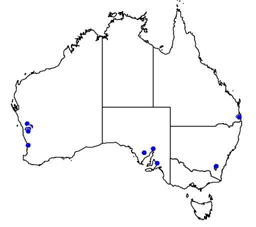 distribution map showing range of Eremophila nivea in Australia