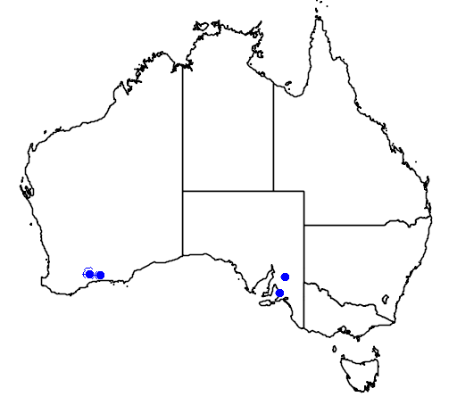 distribution map showing range of Eremophila subteretifolia in Australia