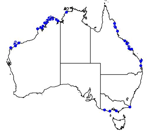 distribution map showing range of Esacus neglectus in Australia