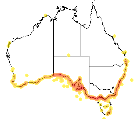 distribution map showing range of Eubalaena australis in Australia