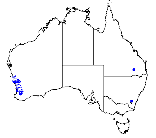 distribution map showing range of Eucalyptus accedens in Australia