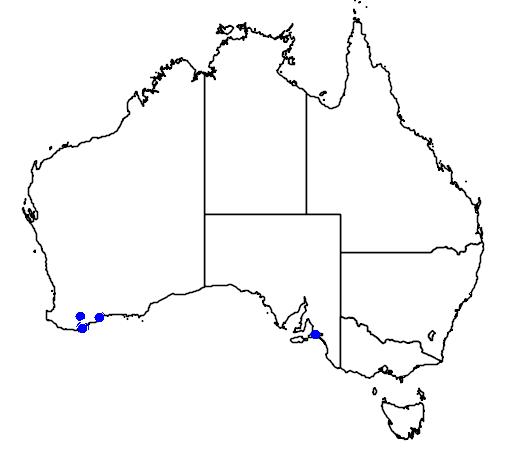 distribution map showing range of Eucalyptus acies in Australia