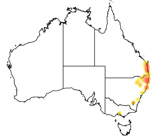 distribution map showing range of Eucalyptus bancroftii in Australia