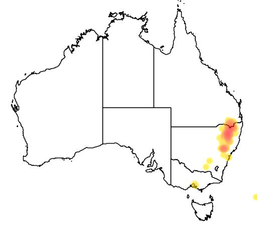 distribution map showing range of Eucalyptus caleyi in Australia