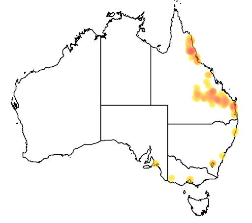 distribution map showing range of Eucalyptus cloeziana in Australia