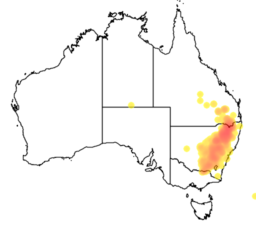 distribution map showing range of Eucalyptus dealbata in Australia