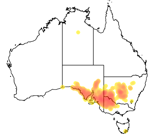 distribution map showing range of Eucalyptus dumosa in Australia
