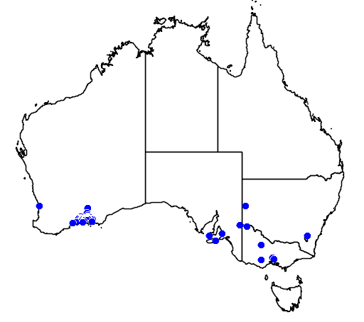 distribution map showing range of Eucalyptus forrestiana in Australia