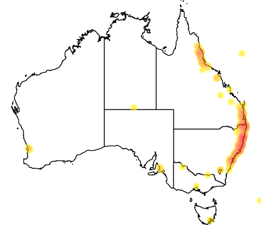 distribution map showing range of Eucalyptus grandis in Australia