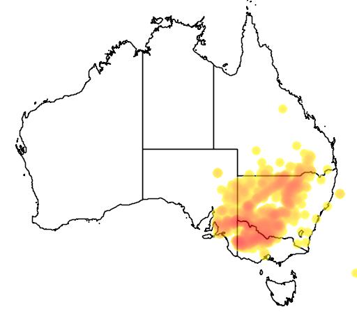 distribution map showing range of Eucalyptus largiflorens in Australia