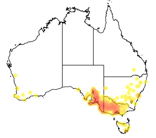 distribution map showing range of Eucalyptus leucoxylon in Australia