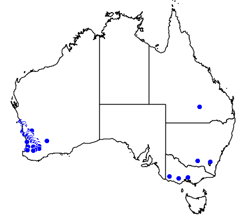 distribution map showing range of Eucalyptus macrocarpa in Australia