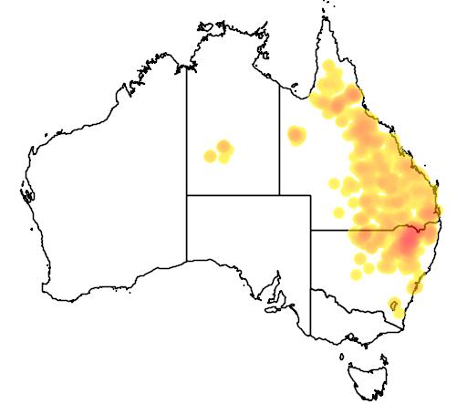 distribution map showing range of Eucalyptus melanophloia in Australia