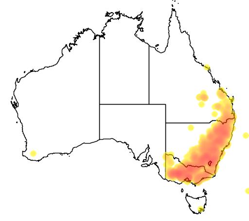 distribution map showing range of Eucalyptus melliodora in Australia