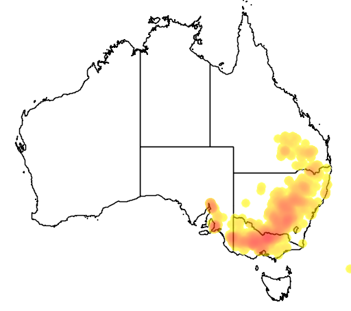 distribution map showing range of Eucalyptus microcarpa in Australia