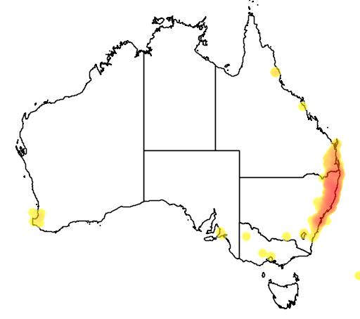 distribution map showing range of Eucalyptus microcorys in Australia