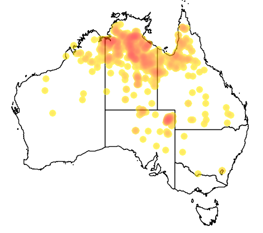 distribution map showing range of Eucalyptus microtheca in Australia