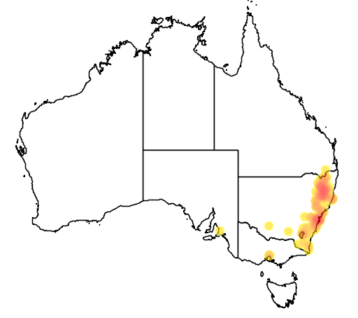 distribution map showing range of Eucalyptus nicholii in Australia