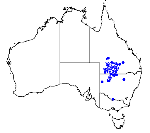 distribution map showing range of Eucalyptus ochrophloia in Australia