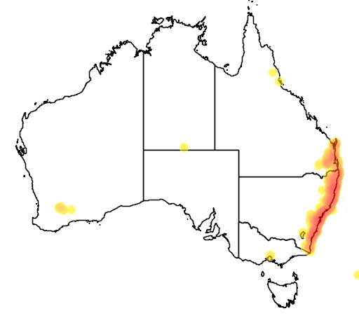 distribution map showing range of Eucalyptus pilularis in Australia