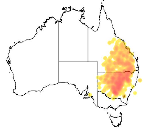 distribution map showing range of Eucalyptus populnea in Australia