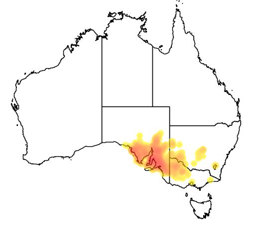 distribution map showing range of Eucalyptus porosa in Australia