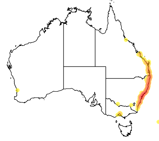 distribution map showing range of Eucalyptus robusta in Australia