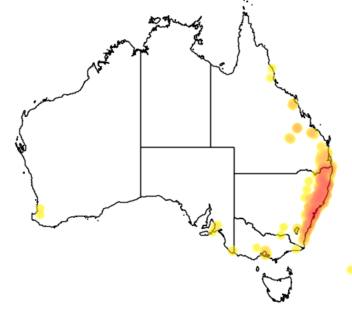 distribution map showing range of Eucalyptus saligna in Australia