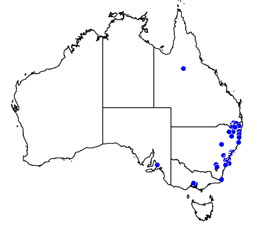 distribution map showing range of Eucalyptus scoparia in Australia