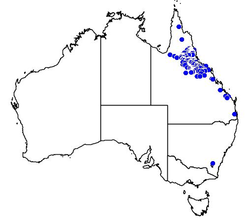 distribution map showing range of Eucalyptus shirleyi in Australia