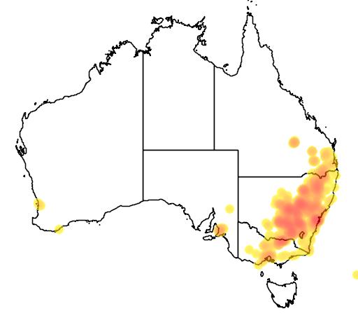 distribution map showing range of Eucalyptus sideroxylon in Australia