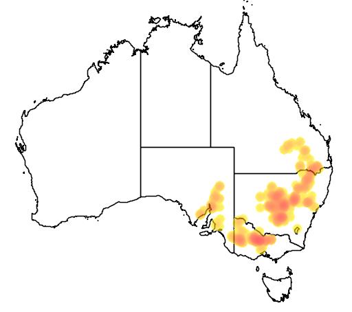 distribution map showing range of Eucalyptus viridis in Australia
