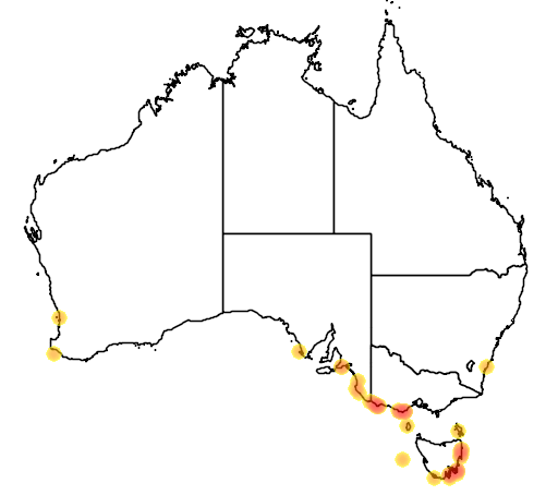 distribution map showing range of Eudyptes chrysolophus in Australia